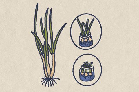 Como plantar temperos em casa