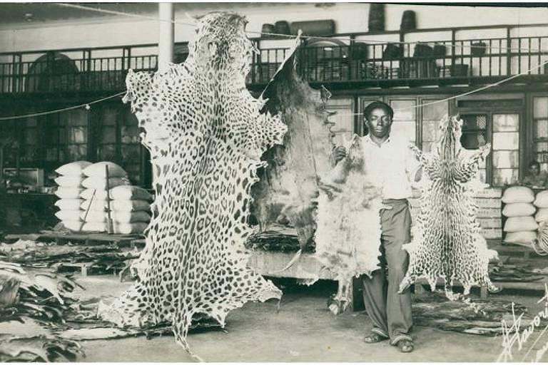 Peles de onças eram comercializadas no Brasil até o final da década de 1960