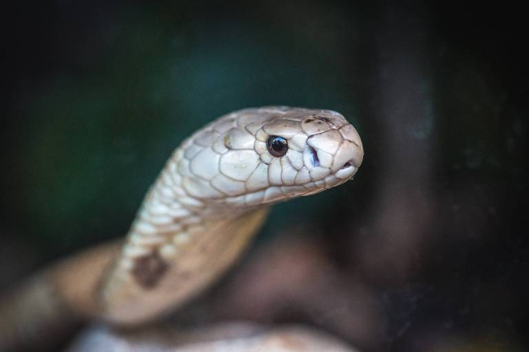 Naja que picou jovem ganha sessão de fotos no zoológico de Brasília