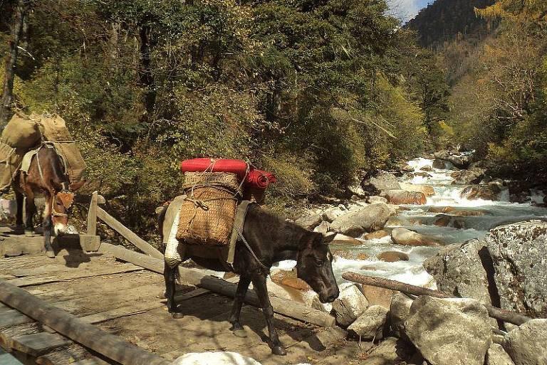 2º dia de trekking ao Base Camp Jomolhari, no Butão