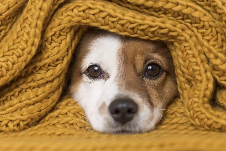 Tratados como filho, cães viram alvo de síndrome humana