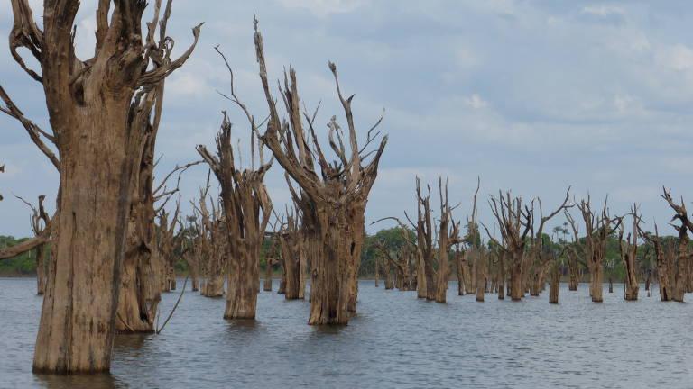 árvores submersas
