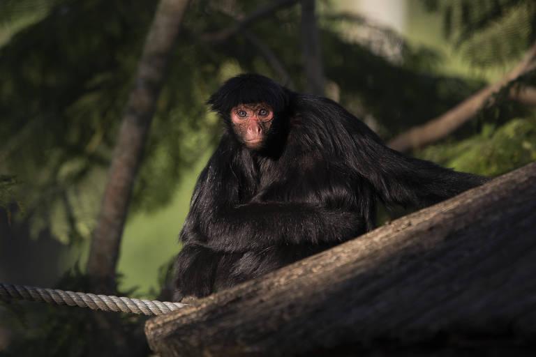 Zoo de São Paulo reabre