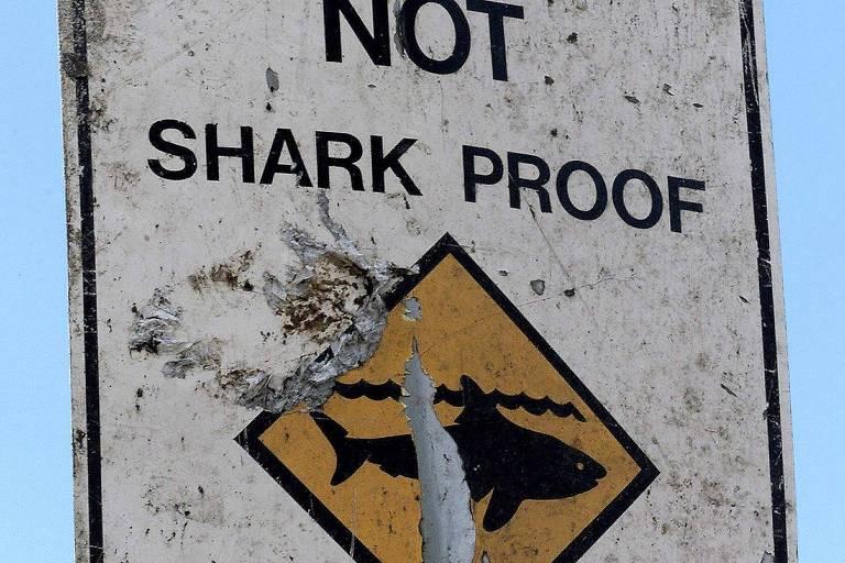 Surfista bate em tubarão e consegue salvar a esposa de ataque na Austrália