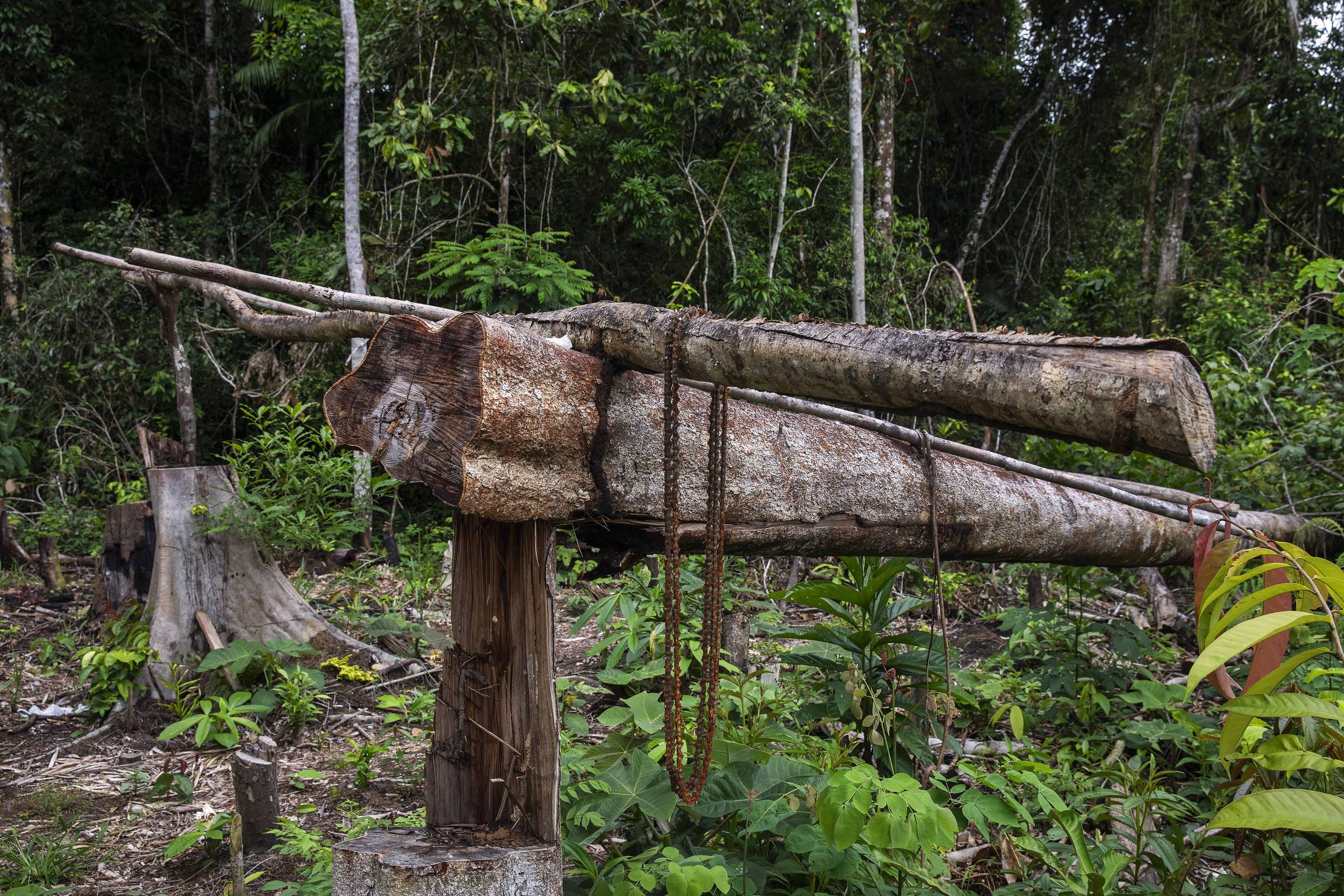 Área desmatada por grileiro dentro do Projeto de Assentamento Extrativista Antimary