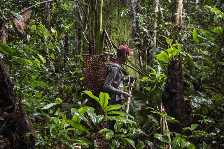 Jasson Oliveira do Nascimento, morador da Reserva Extrativista Arapixi, no Amazonas, coleta ouriços de castanha na área do Projeto de Assentamento Extrativista Antimary, que está sendo invadida por grileiros.