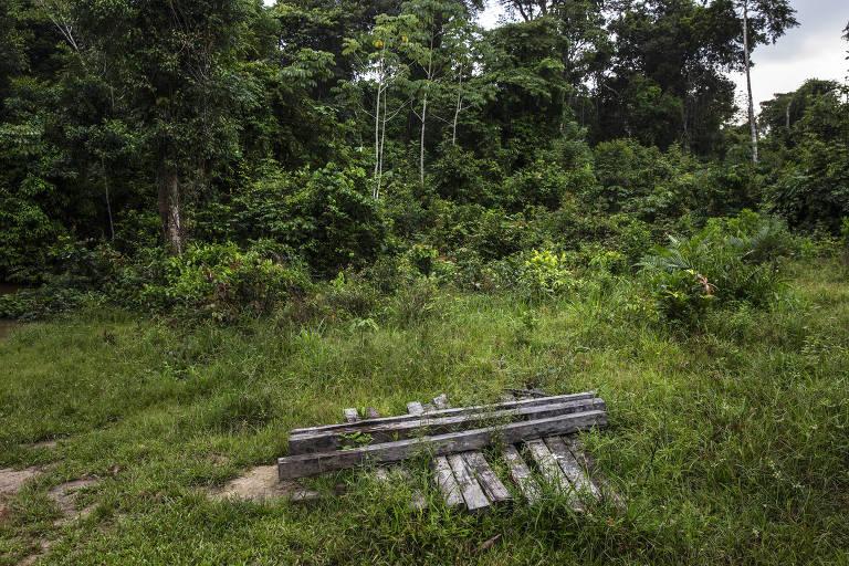 Madeira usada para fazer cerca armazenada em uma área desmatada dentro do Projeto de Assentamento Extrativista Antimary, no limite com a Reserva Extrativista Arapixi, no Amazonas