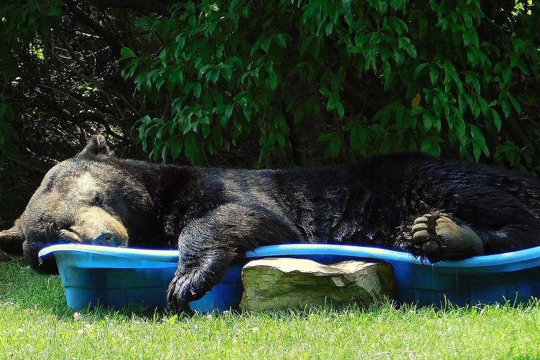 Urso preto é visto em piscina infantil
