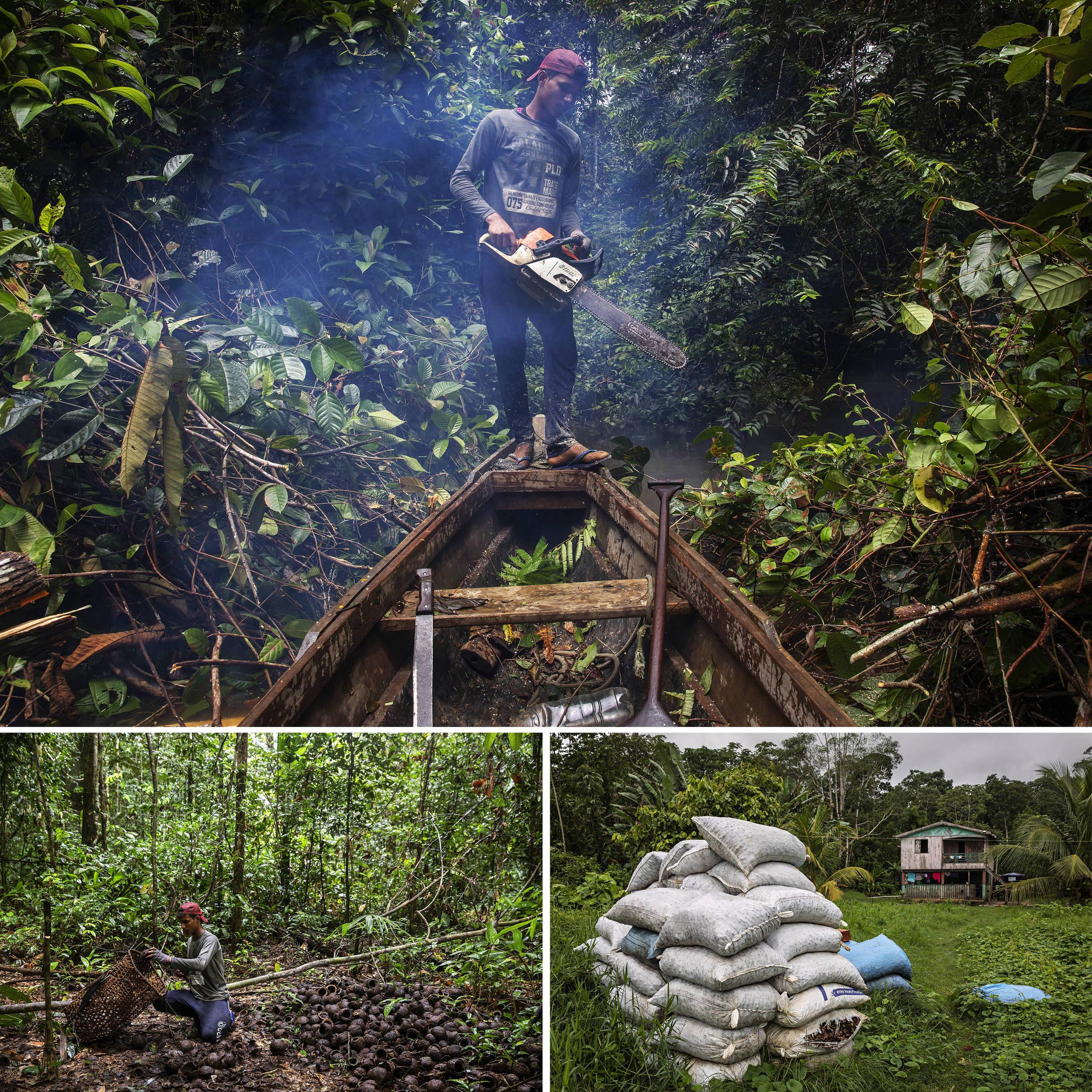 Jasson Oliveira do Nascimento, morador da Reserva Extrativista Arapixi, corta a vegetação para abrir caminho para a canoa no igarapé que leva ao Projeto de Assentamento Extrativista Antimary, onde coleta castanhas