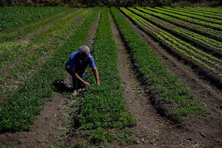 Produtores rurais em Brasília sofrem queda de renda durante pandemia