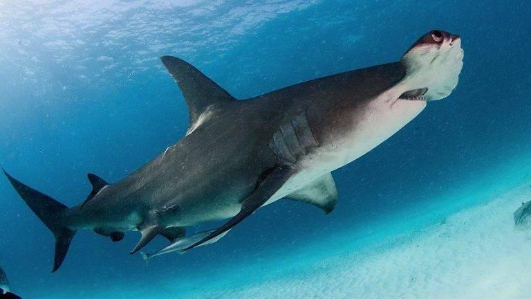 Pesquisadores estudaram tubarões em 371 recifes ao longo de quatro anos
