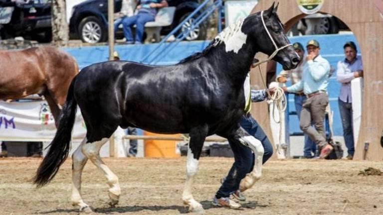 Cavalo conseguiu habeas corpus no Tribunal de Justiça de São Paulo para que seja colocado em liberdade, mas ainda aguarda decisão da primeira instância
