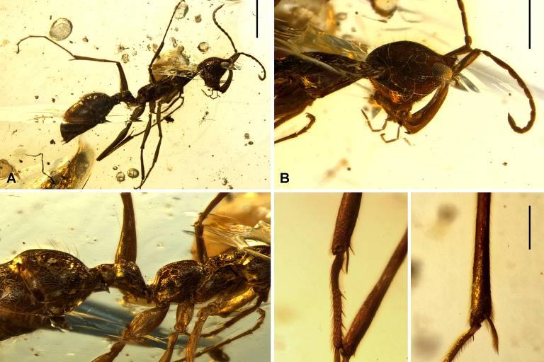 Formigas gigantes mergulhadas em uma composição amarelada