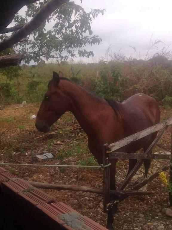 Um cavalo está parado no pasto perto de um muro