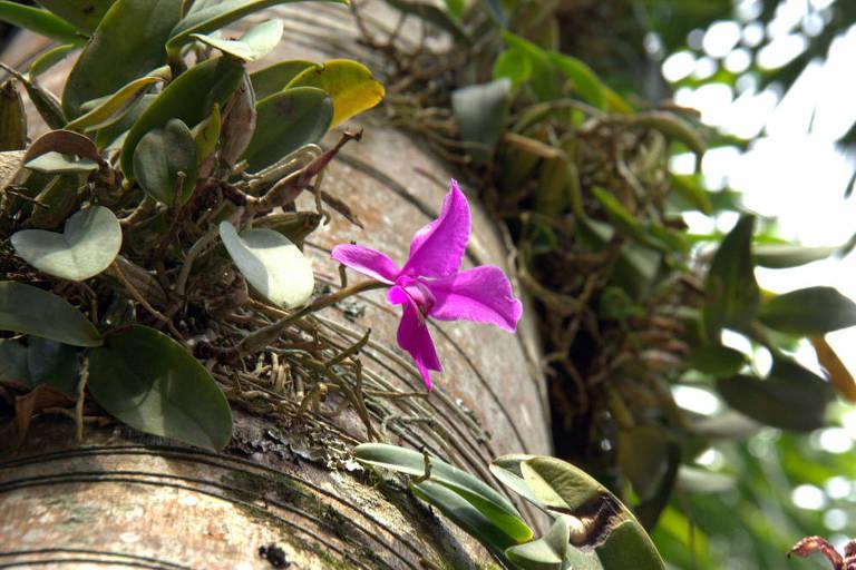 Largo das Orquídeas do Instituto Inhotim, em Brumadinho (MG)