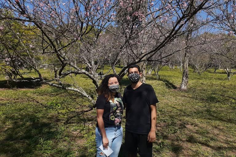 Sem tradicional festival, frequentadores passeiam pelo bosque das cerejeiras