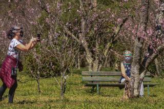 Temporada de Cerejeiras
