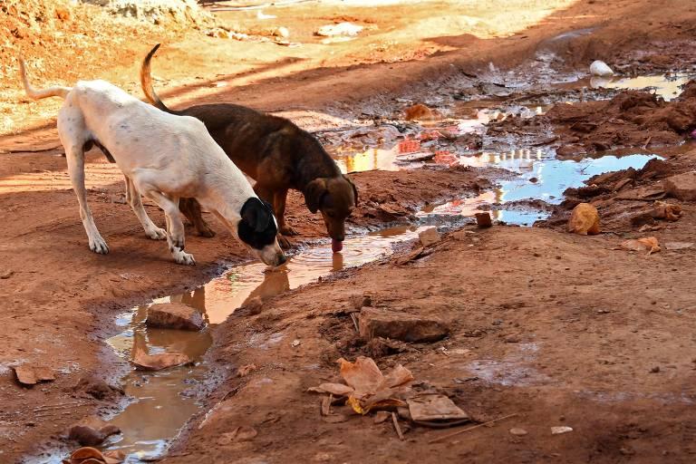 Cães pelo mundo