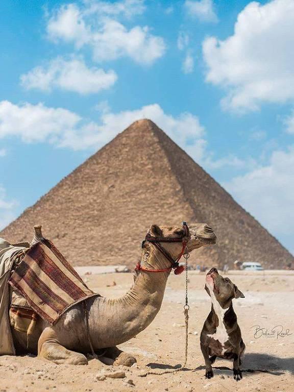 Cães viajam pelo mundo em fotos divertidas