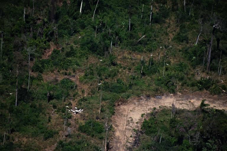 """Floresta degrada e boiada próxima a área desmatada, na região de Novo Progresso, no estado do Pará, local onde ocorreu o """"dia do fogo"""" em 2019"""