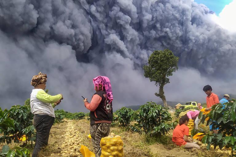 Quatro moradores colhem batatas enquanto o Monte Sinabung expele cinzas vulcânicas ao fundo, em Karo, na Indonésia