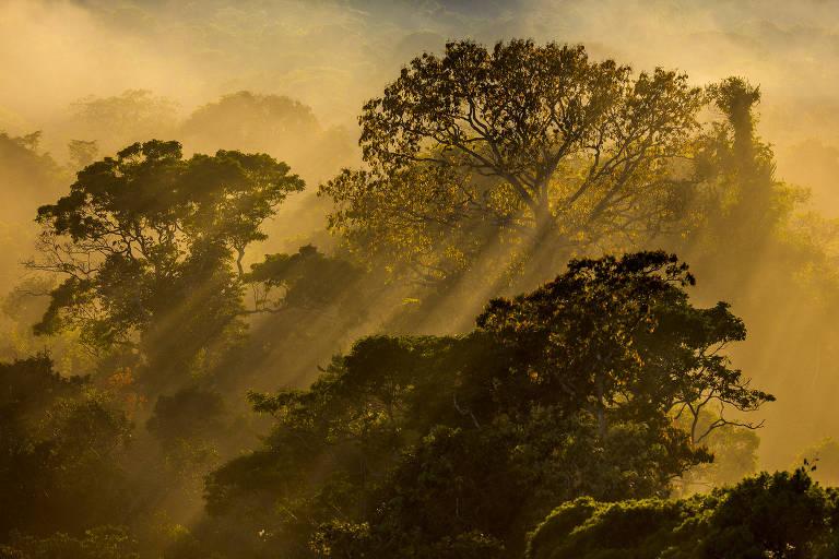 Árvores em pôr do sol