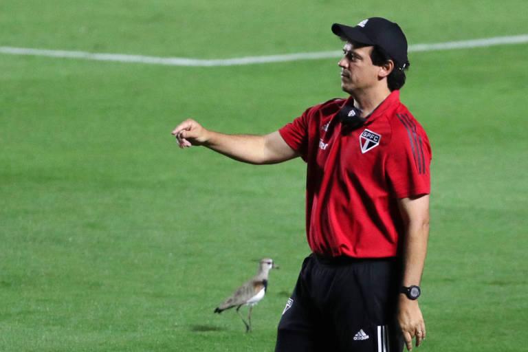 Fernando Diniz com camisa vermelha do São Paulo e boné preto, gesticula na beira do campo, ao lado de um quero-quero