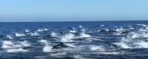 Capitão Dave Anderson flagra cerca de 300 golfinhos no sul da Califórnia.