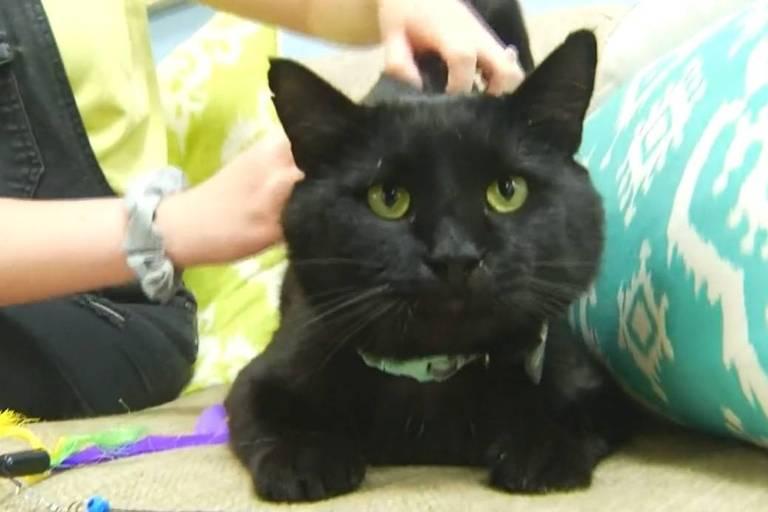 O gato Dennis Quaid, que foi adotado pelo ator Dennis Quaid