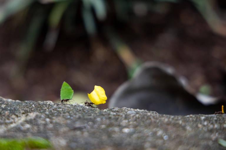Formigas levam as cores do Brasil pela democracia