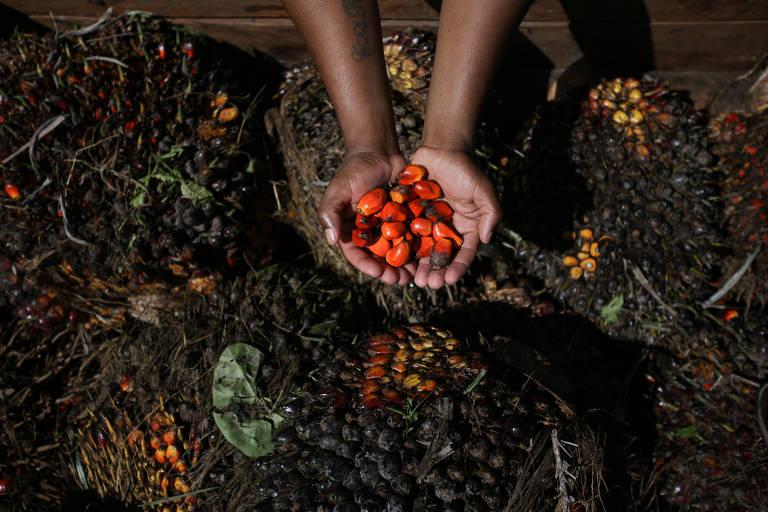 Trabalhador segura a semente do dendê colhido na fazenda Misericórdia, a maior produtora da região de Nazaré, na Bahia; a produção local de dendê caiu sobretudo pela falta de competitividade do produto e o sistema de produção ainda muito artesanal, com baixíssima produtividade