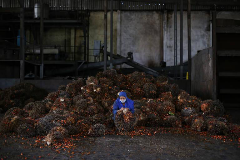 Produção de dendê cai e preços disparam na Bahia