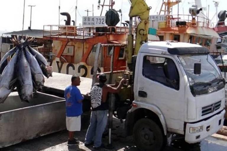Atum sendo descarregado para ser exportado em Majuro