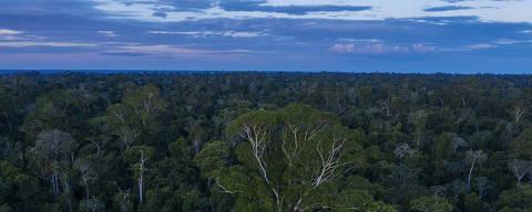 URUARA, PA. 18/07/2020. AMAZONIA SOB BOLSONARO. Area preservada de floresta pr—xima a Uruara, no Para. ( Foto: Lalo de Almeida/ Folhapress )  COTiDIANO ***EXCLUSIVO FOLHA***