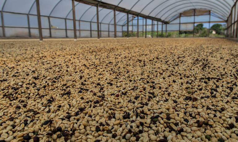 Fazenda de café investe em maquinário durante a pandemia