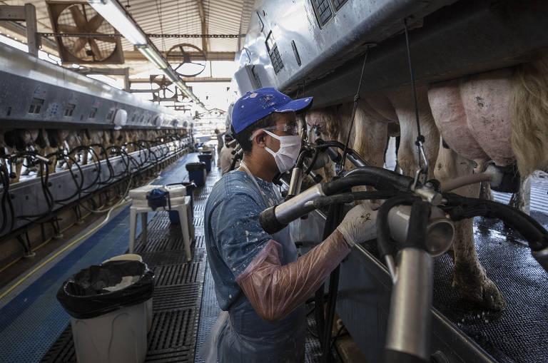Funcionário ajeita equipamento que faz a ordenha mecanizada das vacas leiteiras na Fazenda Agrindus, em Descalvado, interior de São Paulo