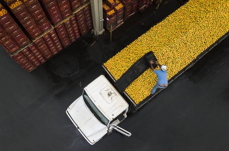 Homem em cima de caminhão carregado de laranjas estende pano preto sobre as frutas