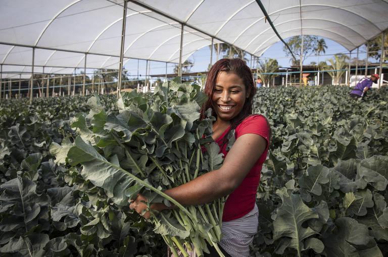 Produtor troca flores por verduras diante de baixa demanda na pandemia