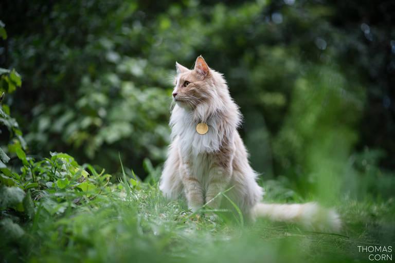 Mittens é um gato comunitário que vive nas ruas de de Wellington, capital da Nova Zelândia