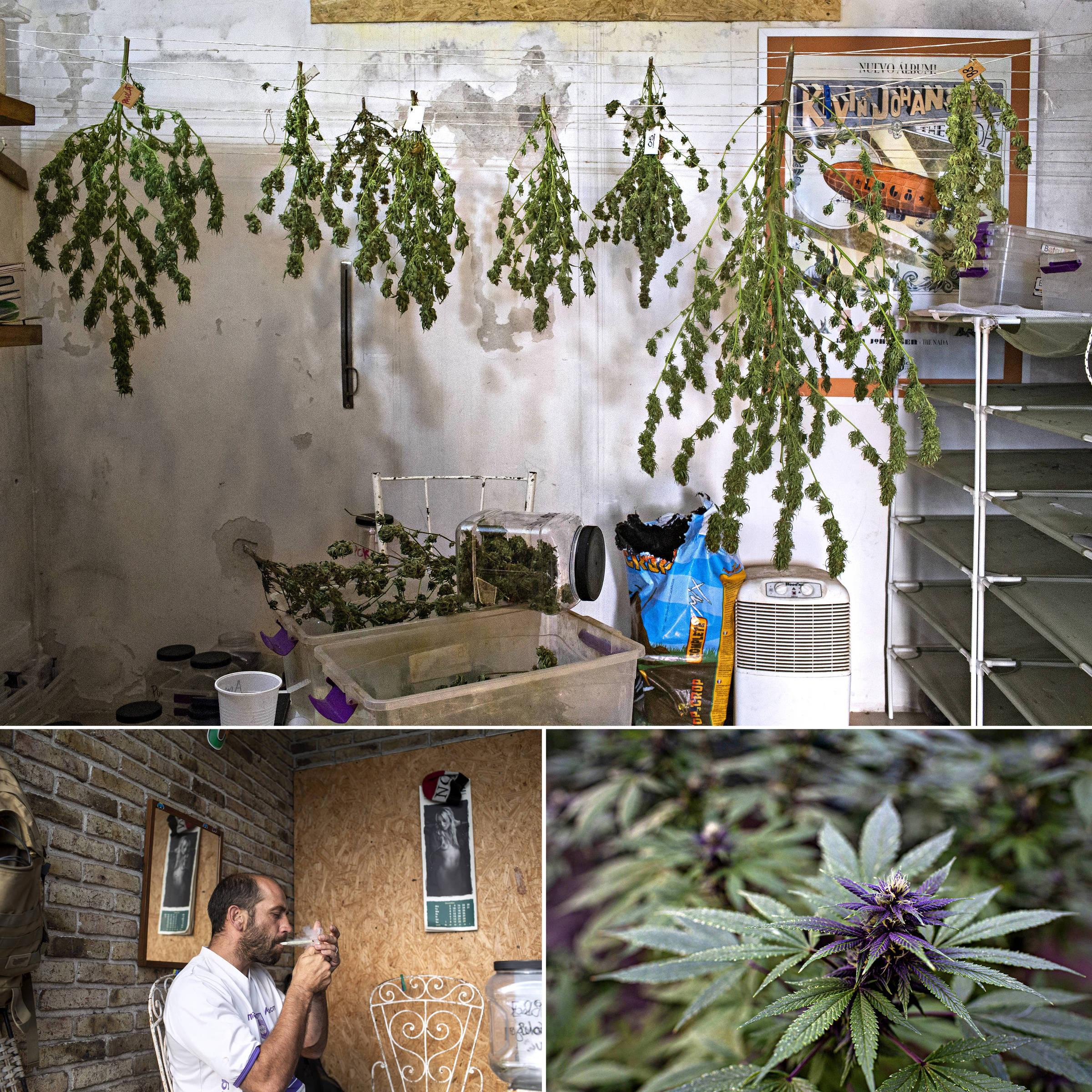 Clube de cultivo de Guillermo Amandola (embaixo, à esq.), próximo a Montevidéu