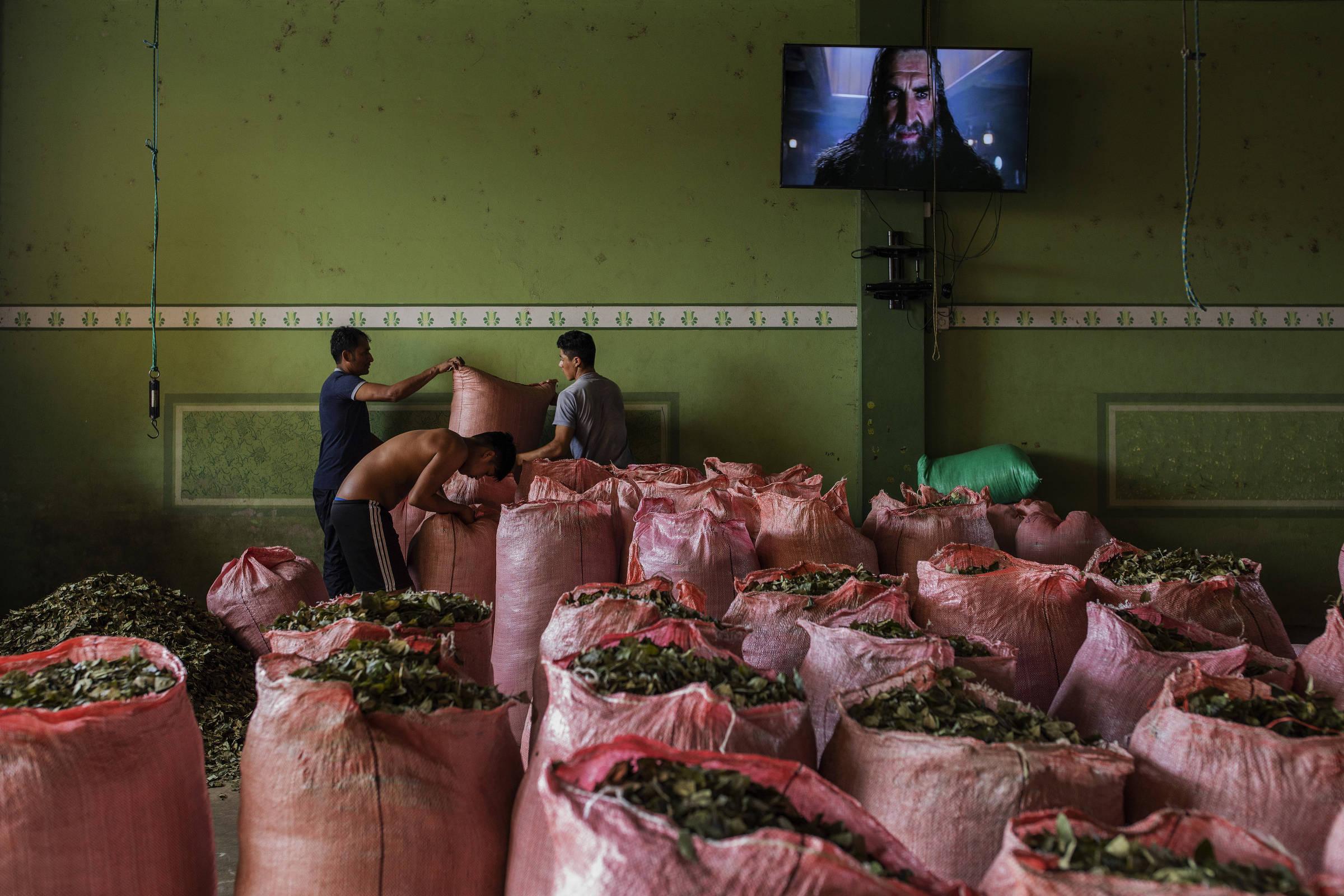 Sacos de folha de coca em mercado em Chimoré, na região do Chapare