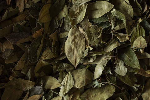 Folhas de coca no mercado em Chimoré, na região do Chapare