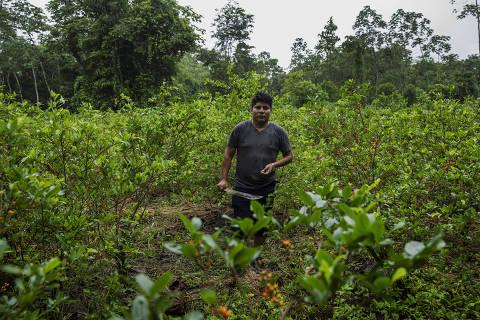 Leonardo Loza, lider cocaleiro, caminha por sua plantação de coca na zona rural de Chimoré
