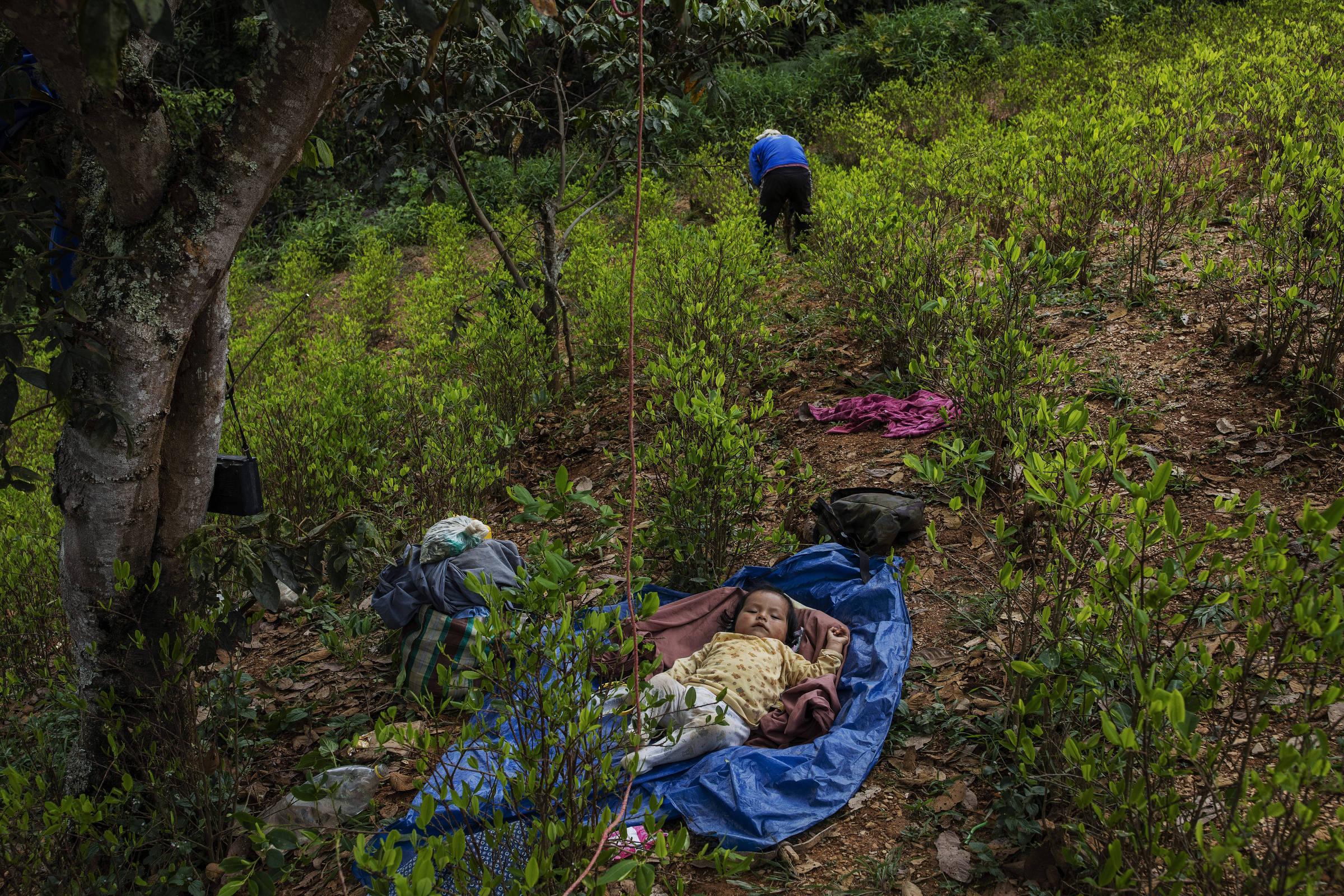 Pedro Antonio, filho de Elton Morán, descansa na sombra enquanto o pai trabalha na plantação