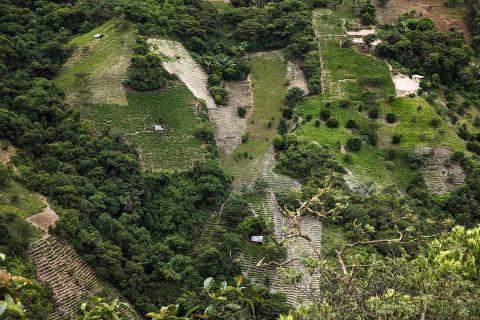 Plantações de coca nas montanhas da região dos Yungas