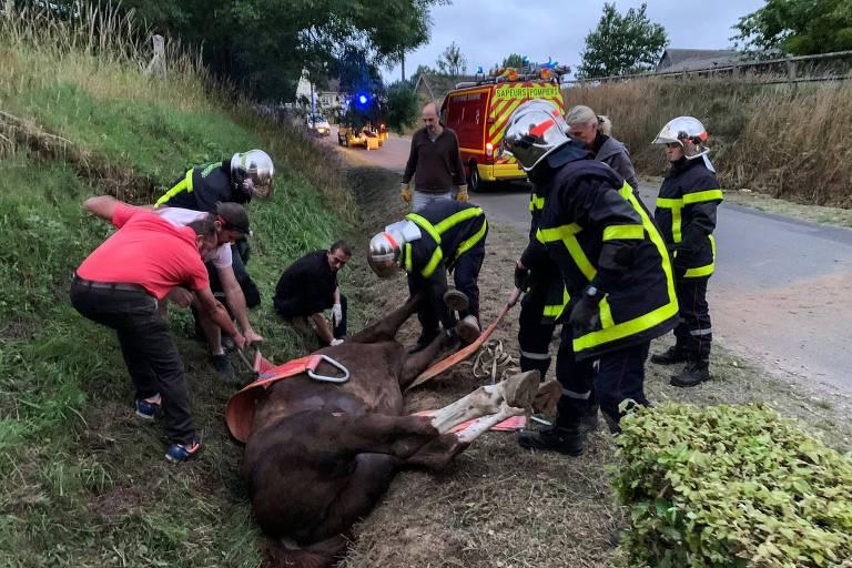 Misteriosas mutilações em mais de 150 cavalos assustam a França