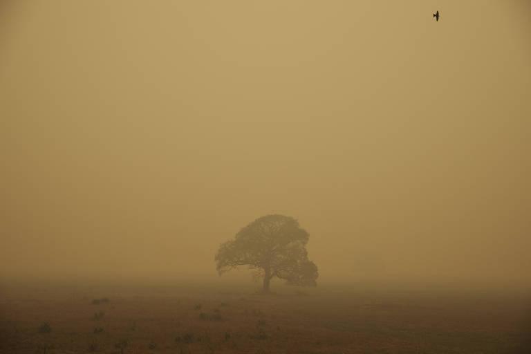 No centro da foto, uma árvore ao longe; foto é em tons de marrom, mostra fumaça das queimadas no Pantanal