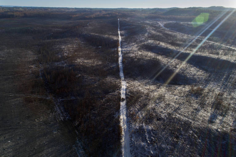 Pinhal de Leiria, reserva florestal destruída pelos incêndios que atingiram a região central de Portugal em 2017; foto aérea mostra grande descampado com restos de árvores, tudo marrom e seco