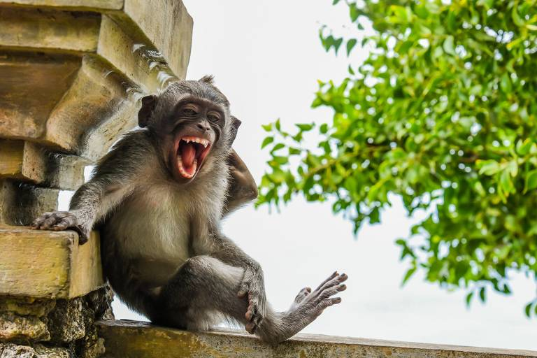 Confira as imagens finalistas do Comedy Wildlife Photography Awards 2020