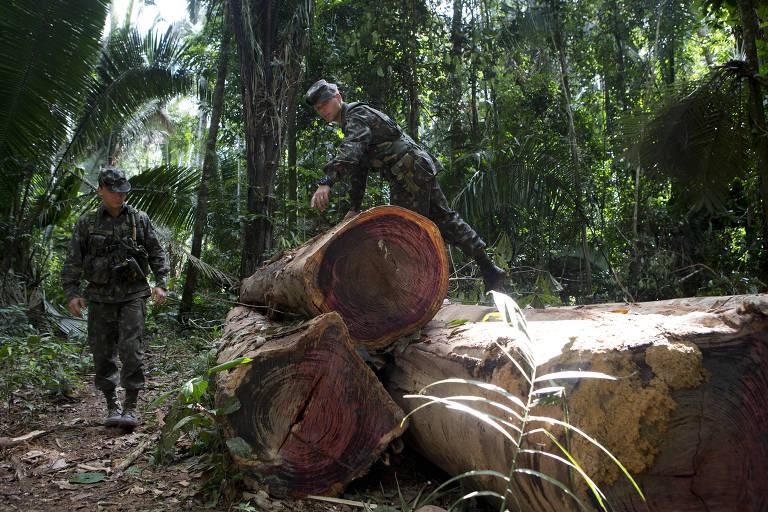 Um soldado pisa sobre duas grandes toras de árvores, cortadas, enquanto outro observa, em meio a floresta densa